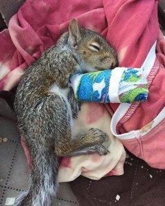 SquirrelInCast