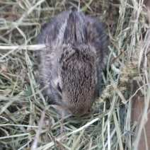 Little bunny found by a dog
