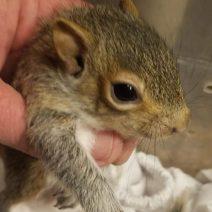 Baby squirrels' tree was cut down